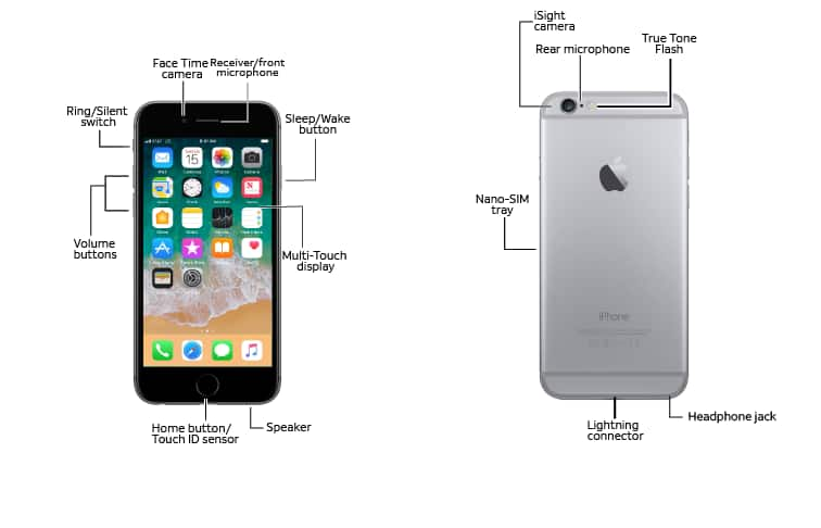 Iphone diagram with labels wiring library apple iphone 6 6 plus diagram at t device support rh att com human skull labeled diagram butterfly diagram with labels ccuart Gallery